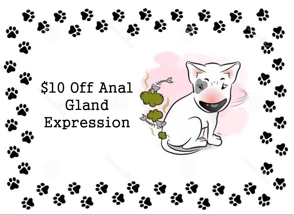 $10 off anal gland expression